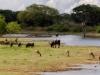 Yolanda Suarez Saavedra - Relax. Parque Nacional de Yala. Sri-Lanka